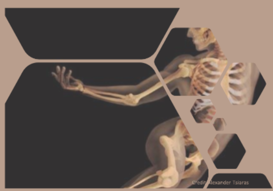 Embodied Anatomy – Living in your Bones